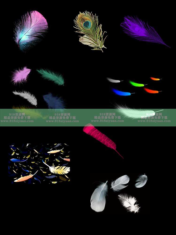 飘落羽毛素材 白色彩色羽毛PSD免扣素材 PS羽毛笔刷画笔预设